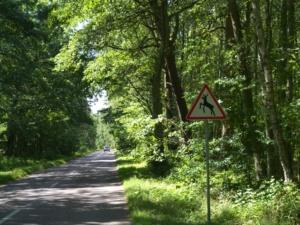 In den Wäldern auf der Landzunge vor Litauen