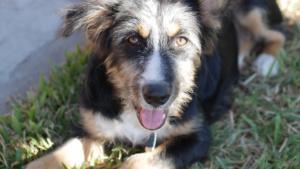 Moja, sie ist unseren Freunden als Baby vor 3 Monaten zugelaufen. Ein toller Hund!