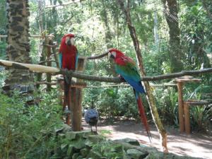 Loros / Papageien im Güiraoga-Park