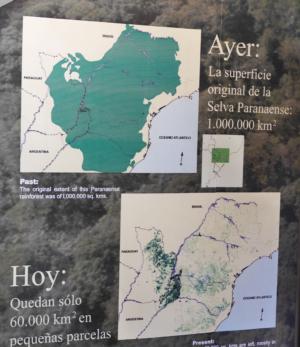Die Entwicklung des Regenwaldes
